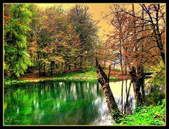 green paradise (NURAY YUZBASI) Tags: lake reflection green turkey paradise autum soe bolu yedigller blueribbonwiner theunforgettablepictures brillanteyejewels smorgarsbord flickrlovers
