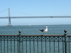 Bay Bridge with gull