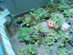 kolam lintah (shakirabid) Tags: kedah kolam lintah lintahfarm