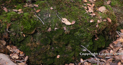 Mossy Rock (LLChemi) Tags: rock mossy