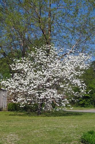 Spring In Mena 9