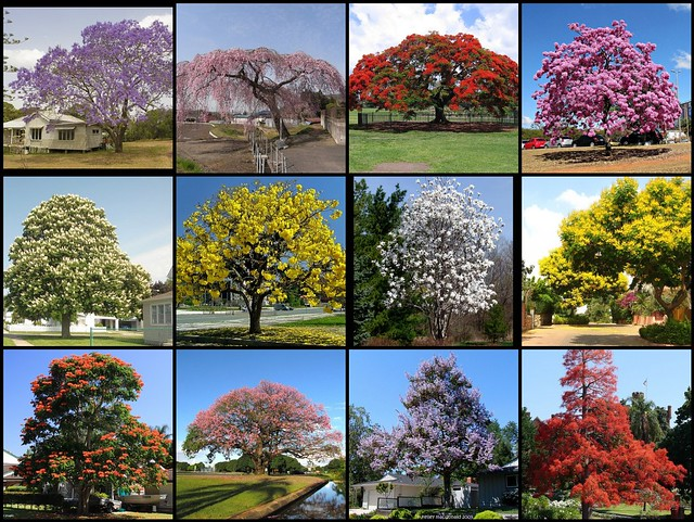 Most beautiful flowering trees of the world