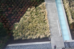 IMG_8712 (bmaryman) Tags: seattle wamu washingtonmutual greenroof