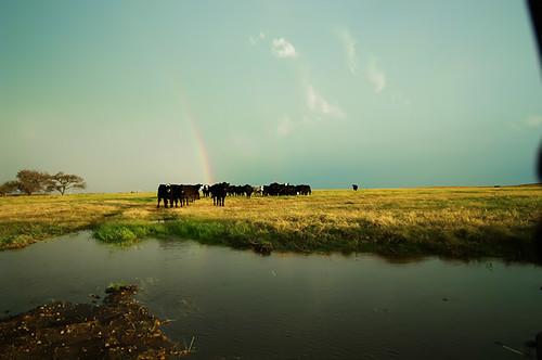 rainbow 067