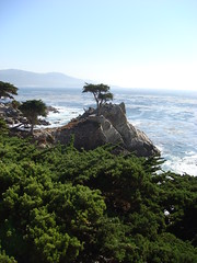 the famous lone cyprus on 17 mile drive