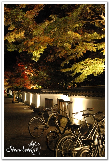 20071121京都永觀堂夜楓(2)