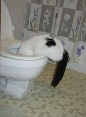 Spot on toilet