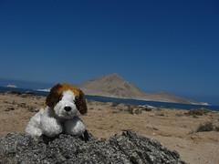 chile sea dog mar playa perro desierto peluche pandeazucar pelao chañaral piquero