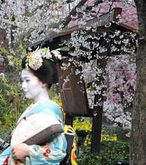 Maiko-san (*yasmin*) Tags: girl japan spring kyoto maiko geiko geisha  april sakura  kimono gion week14  52weeksaboutu2008 52wau2008 52wau2008wk14