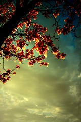 Clearing Skies (e|[d]|ge.) Tags: above pink flowers blue light sky favorite sunlight white storm black flower tree nature beauty smile up look youth clouds vintage outside happy grey petals spring warm pretty heaven branch peace escape open view angle bright wind sweet gorgeous branches touch joy perspective free happiness grace calm fresh petal clear gift smell trunk series tall taste reach senses lovely breathe breeze bliss relaxed refreshing