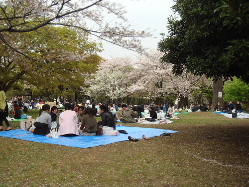 Hanami at Yoyogi