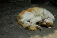 2008-0510-cat13