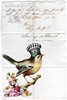 Bird Queen - Antique Letter Collage (ms_mod) Tags: original roses bird art collage vintage paper recipe design doll antique mixedmedia ooak victorian queen ephemera card letter crown etsy baroque kewpie dollface ledger dollfacedesign