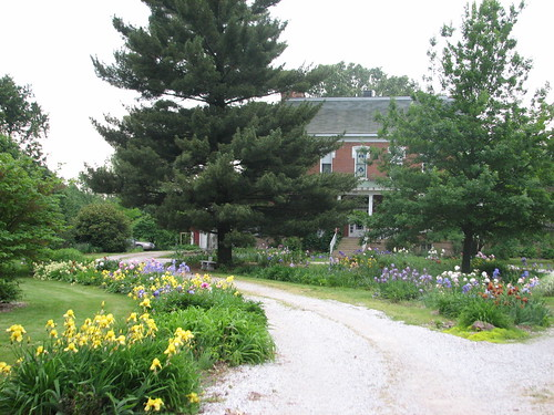 driveway with irises