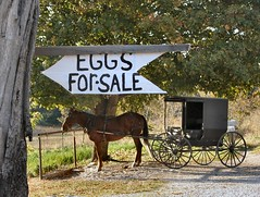 Eggs For Sale (cindy47452) Tags: horse rural indiana amish 100views orangecounty buggy hitch hitchingpost amishstore amisch eggsforsale biolebensmittel bioeier sansogm gentechnikfrei gmofreeproduce