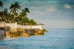 Bahamas-052.jpg (ajdoudt) Tags: patrick sun blue ocean beautiful palmtree bahamas roper sunny green wedding vacation shannon tropical shanny