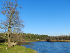 River Spey, near Grantown on Spey, Jan 2017 (allanmaciver) Tags: rantown spey river speyside water blue curve viewpoint trees fishing scotland cairngorm national park allanmaciver