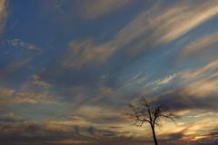 Cirrus and Tree (bp200mm) Tags: