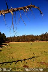 Grasslands near Ooty