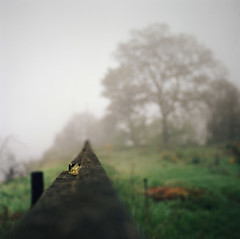 the trials of being a protagonist (manyfires) Tags: morning mist tree green film fog oregon fence mediumformat square portland spring focus bokeh hasselblad pacificnorthwest pdx lichen oregoncity fenceline palabra hasselblad500cm 500px oldcanemahpark