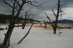 mammoth hot springs (O'Bydalej) Tags: orange nature yellowstonenationalpark wyoming stormclouds mammothhotsprings sigmaaf1770mmf2845dc