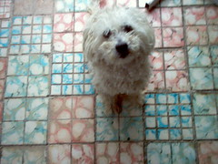 Botones (marthax) Tags: dog cute perro mascota botones cmonotevoyaquerer