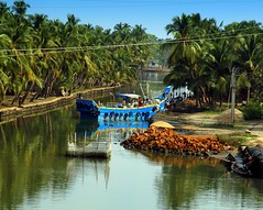 Chettuva Puzha (inderSTADT) Tags: india coconut kerala lagoon backwaters thrissur trichur balagopalan puzha inderstadt chettuva dravidam dravidum draveyedum