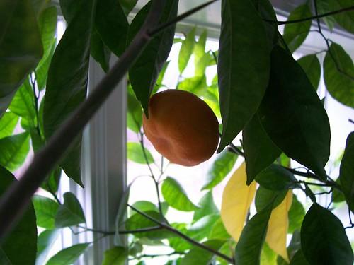 An orange!