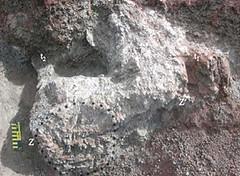 fossiel dinogezin Oryctodromeus cubicularis