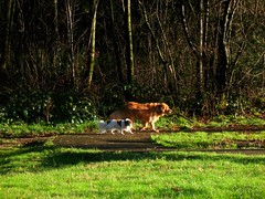 Who is walking who? (Starlisa) Tags: trees dog green grass walking i5 2007 dec20 img9978 starlisa washingtonrestarea