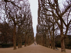 Jardin des Plantes (Hugo Cesar Gusmao) Tags: trees winter paris france day cloudy sony parks frana inverno rvores jardindesplantes cubism parques sonydsch2 dsch2 goldenmix diamondclassphotographer flickrdiamond wonderfulworldmix rememberthatmomentlevel1