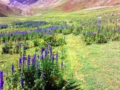 Saral Valley (Tanwir Jogi ( www.thetrekkerz.org )) Tags: travel pakistan beautiful trekking trek valley traveling tours lahore treks jogi saral beautifulpakistan trekkinginpakistan tanwir travelinginpakistan thetrekkerz tourisminpakistan tanwirjogi wwwthetrekkerzcom