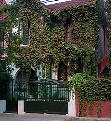 Casa urbana cubierta de plantas trepadoras