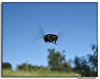 fly (bermudes) Tags: macro verde bug fly flight mosca vôo insetos bermudes insecta varejeira