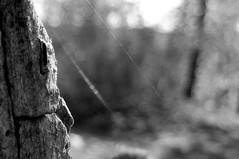 Erlknig (sancha_on_fire) Tags: bw nature suhanovo