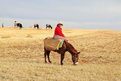 harvest (luca.gargano) Tags: voyage travel people animals wheat harvest donkey morocco maroc marocco exploration viaggio gargano lucagargano