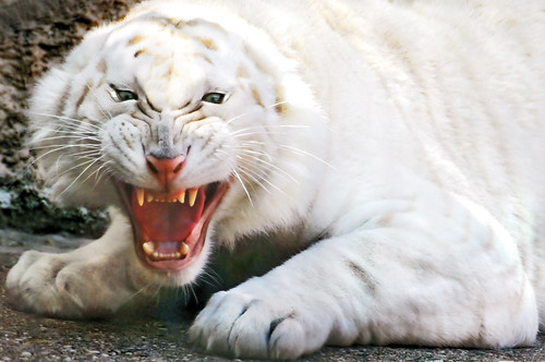 In the Mouth of the Tiger