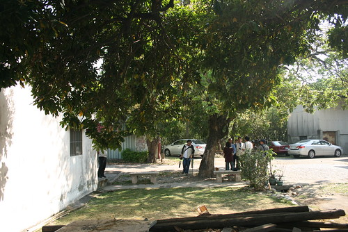 聚落中處處有老樹的存在。
