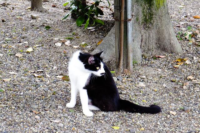 Today's Cat@2011-05-30