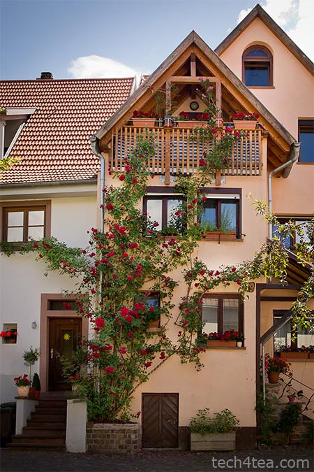 Beautiful rose covered house in Schriesheim