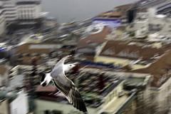 blurry bird (Dystopian Dreamer) Tags: sky blur bird canon turkey fly flying blurry seagull flight istanbul galatatower