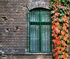 Window to Autumn (NatashaP) Tags: autumn fab fall window wall nikon searchthebest bricks ivy vine trellis erosion explore thumbsup soe ih bigmomma latticework blueribbonwinner d40 supershot interestingness203 outstandingshots flickrsbest challengeyouwinner abigfave artlibre platinumphoto anawesomeshot superbmasterpiece infinestyle goldenphotographer diamondclassphotographer megashot theunforgettablepictures 75faves photofaceoffwinner photofaceoffplatinum a3b theperfectphotographer pfogold pfoplatinum friendlychallenge lpwindows