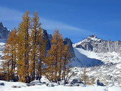 Larches in the Enchantment Basin, Dragontail in the background.