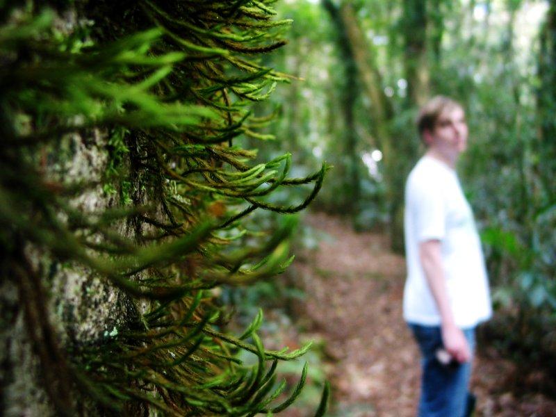 hairy tree