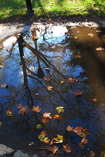 Puddle of water @ Central Park