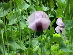 ortobotanico 341 (blum1) Tags: alberi fiori piante ortobotanico
