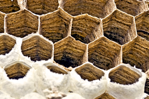 Wasp nest (closer)