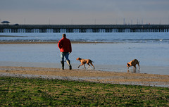 Walking the dogs, Appley beach, Ryde (s0ulsurfing) Tags: ocean blue light sea people dog sunlight seascape man seaweed beach dogs water silhouette walking island coast pier sand exercise bright stones candid shoreline calming silhouettes peaceful pebbles human coastal shore vectis isleofwight coastline lowtide isle wight 2007 ryde rydepier blueribbonwinner appley s0ulsurfing abigfave colorphotoaward appleysands