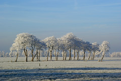 wintertrees (atsjebosma) Tags: trees winter shadow sun white grass frozen bomen blauw bevroren nederland thenetherlands bluesky explore lucht schaduw wit zon friesland supershot 10faves 25faves superbmasterpiece diamondclassphotographer