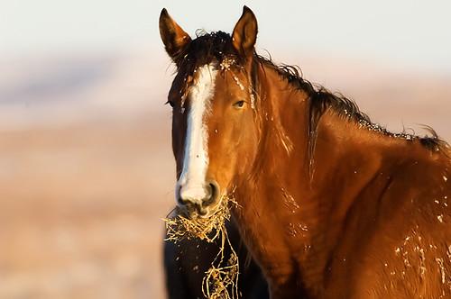Feeding Horses 159